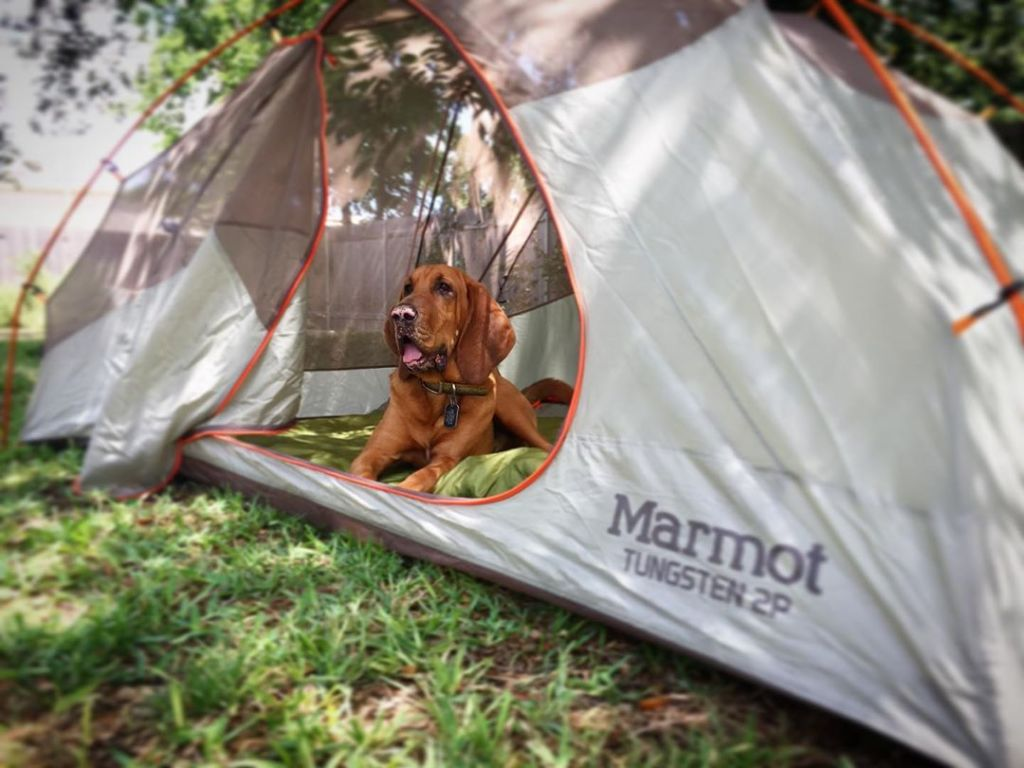 marmot tungsten dog